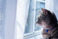 A gray tabby cat with a blue collar and bell looking out a window.