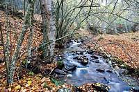 Dehesa stream in the Sierra Cebollera. Somosierra. Madrid. Spain. Europe.
