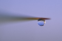 Macro image of a water drop suspended from beach grass.