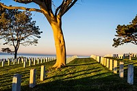 The rising Sun illuminating trees with the ocean in the background. Fort Rosecrans National Cemetery, San Diego, California, United States.