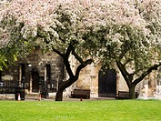 Spring Blossom at York Minster Library in the Old Palace Deans Park York Yorkshire England.