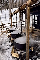 Three cast iron evaporator pots over open fire to produce maple syrup at a sugar shack.