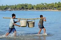 Myanmar, Rakhine State, Ngapali surroundings, Lon Tha beach, Fishermen unloading fish.
