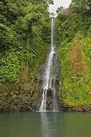 Rainforest in Ureka region Bioko, Guinea Ecuatorial