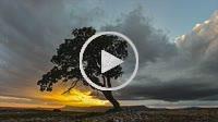 Tree at sunset. Almansa. Albacete province. Spain