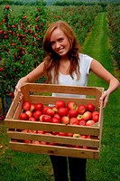 Young woman carrying a box with red apples in the Swedish fuit district Kivik.