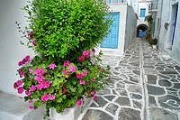 Paros white houses with typically colourful and door frames, and painted paving stones, Paros, Cyclades, Greece, Europe