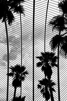 Detail of the Umbracle with palms, made by Santiago Calatrava. Valencia, Spain.