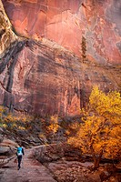 Fall colors have arrived at Echo Canyon at Zion National Park, Utah.