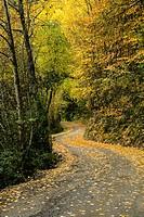 bosque caducifolio, Garganta de Escuaín, parque nacional de Ordesa y Monte Perdido, Provincia de Huesca, Comunidad Autónoma de Aragón, Pyrenees Mounta...