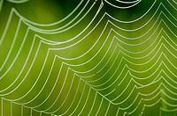 Spider web. Extremadura. Spain.