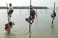 Ahangama, Sri Lanka: stilt fishermen