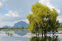 Myanmar, Kayin (Karen) State, Hpa-An region, Flooded paddy fields and Zwegabin range.