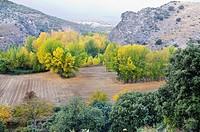 Autumn in the canyon of Rio Dulce. Aragosa. Guadalajara. Castilla la Mancha. Spain. Europe.