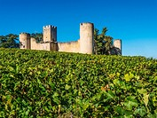 France, Aquitaine, Gironde. Budos castle, XIIc., in the Graves wines district, of the Bordeaux wines area,