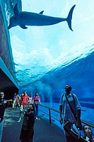 People visiting the dolphins tank at the Aquarium of Genoa. Italy.