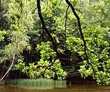 Poland. Masurian Lake District. Krutynia river