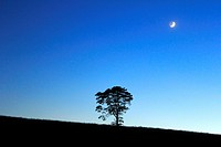 Twilight with a tree in a field and the moon above