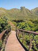 Cape Town South Africa Kirstenbosch.