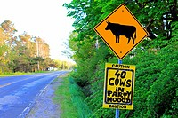 Funny road sign about cattle.