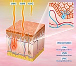 Illustration of the segment of the exposed skin to sunlight and solar UVA, UVB, UVC.