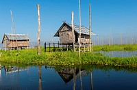 View of bamboo huts on stilts in the floating man-made islands and floating gardens which are kept in place with bamboo sticks that are attached to th...