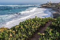 Coastal scene photographed on a Spring morning. La Jolla, California, USA.