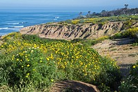 Looking down on the Pacific Ocean and and wildflowers at Sunset Cliffs Natural Park in San Diego, California.