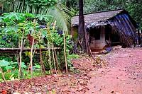 Wooden house in Kuskem, Cotigao sanctuary, Goa, India