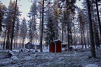 A wooden cottage is standing at snowy forest. Bredbyn, Västernorrland, Sweden.