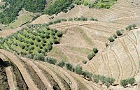 Vineyards near village Assento. The valley of river Douro. It is the wine growing area Alto Douro and listed as UNESCO World heritage. Europe, Souther...