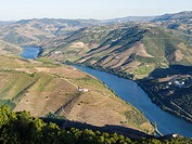 View over the valley of river Douro near Peso da Regua from Miradouro de S Leonardo em Galafura. The valley of river Douro. It is the wine growing are...