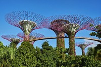 Singapore, Marina Bay, Garden By the bay, botanic garden, Supertree Grove.