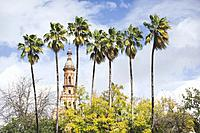 palm trees lined up in front of church, seville, Spain