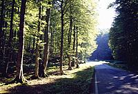 Beech forest and road. Sierra de Aralar Nature Reserve, Navarra, Spain.
