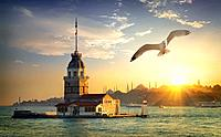 Seagull fliying near Maiden's Tower in Istanbul at sunset, Turkey.