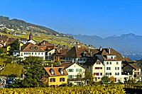 Winegrowing village of Rivaz in the Lavaux vineyards, Vaud, Switzerland.