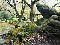 Gritstone Rocks at Birk Crag in Autumn Birk Wood Harrogate Yorkshire England.