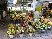 Amsterdam Open Market with Flowers stalls, Amsterdam, Netherlands, Holland, Europe.