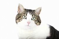 Beautiful cat over white isolated background.