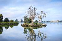 Cormorants nesting on a tree , Bird island , Lake Merritt, Oakland , California , USA.