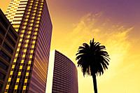 highrise buildings and palm tree in Downtown Oakland , California , USA.