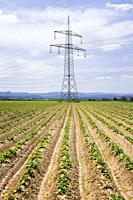 Field of young potao plants and electrical transmission towers , Stuttgart, Baden Württemberg , Germany.