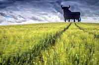 Osborne bull on a wheat field, long exposure shot, Castilleja del Campo, Seville, Spain. The Osborne bull is a 14-metre (46 ft) high black silhouetted...