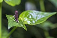 A moth. Image taken at Kampung Skudup, Sarawak, Malaysia.