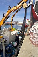 Purse-seine fishing. Loading the nets. Sardines (Sardina pilchardus). Horse mackerel (Trachurus trachurus). Mackerel (Scomber scombrus). Eastern Atlan...