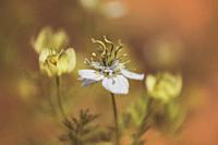 dreamy white flower close-up.