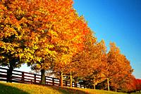 Autumn trees line a country road in Blue Grass Country, Kentucky.
