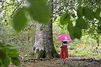 little girl beside a remarkable common beech tree in the Forest of Rambouillet, Haute Vallee de Chevreuse Regional Natural Park, Department of Yveline...