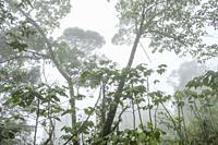 bosque humedo, El Quiche, Sierra de los Cuchumatanes,Guatemala, Central America.